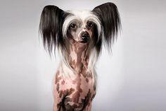 Tim_Flach-Hunde