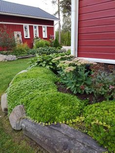 Patjarillo Stepping Stones, Outdoor Decor, Plants, Home Decor, Stair Risers, Decoration Home, Room Decor, Plant, Home Interior Design