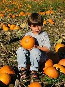 Fall Harvest Pumpkin Festival Carnation, Washington  #Kids #Events