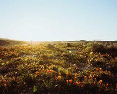 Grandiose (Landschafts)Fotos von Chris Ozer