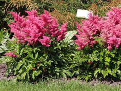 garten im landhausstil anlegen - nützliche tipps | garden ideas, Gartenarbeit ideen