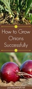 how to grow onions successfully