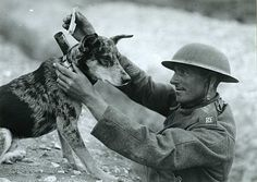 War dog in World War I delivering a message to a soldier in the trenches or getting ready to take one out.
