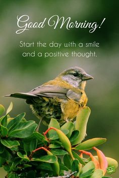 Good Morning. Start the day with a smile and a positive thought.