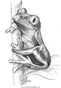 Frosch 061 Frosch Frosch Zeichnen Fische Zeichnen Frosch Malen