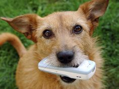Pets Swallow Household Items Socks, Underwear, Rocks and Balls Can Harm Your Pet