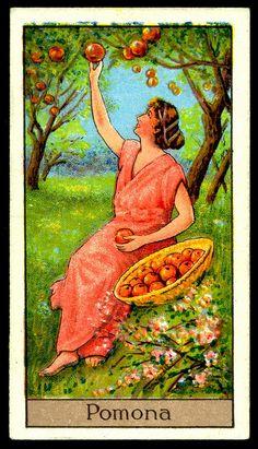 "Cigarette Card - Pomona. ""Mythological Gods & Goddesses""."