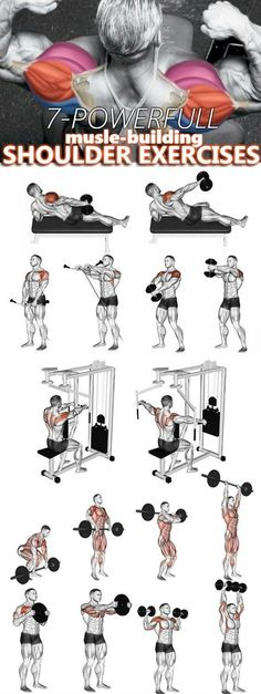 Looking for shoulder-growing guidance? This articl… Shoulder workout & exercises. Looking for shoulder-growing guidance? This article will educate you on the shoulder muscles as well as offer several different shoulder. Gym Workout Tips, Weight Training Workouts, At Home Workouts, Workout Exercises, Training Exercises, Traps Muscle Workout, Fitness Workouts Arms, Deltoid Workout, Gym Workouts For Men