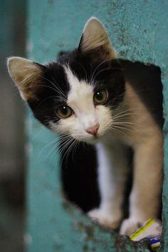 111 fotos de gatos : Fottus – Fotos engraçadas e fotos legais …