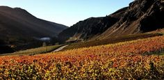 Also on the road from Cromwell to Queenstown - one of the most scenic drives in country to get there Riesling and Pinot Noir recommended