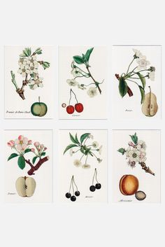 French Flora & Fruit Note Card Set