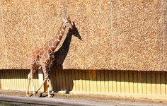 Baltimore Zoo by PietrosMomma, via Flickr