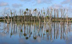 Orlando Wetlands Park - Christmas, FL