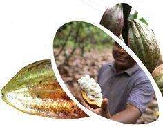 Fairtrade kakao Fair Trade, Hummus, Ethnic Recipes, Food, Fair Trade Fashion, Meals