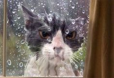 LET ME IN OR ELSE: Animals having a worse day than you!