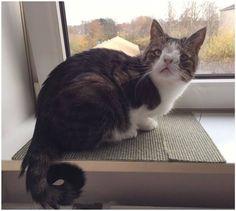 Кот с синдромом Дауна очаровал весь мир!