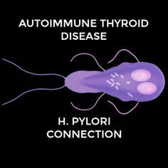 Is there a link between thyroid disease and helicobacter pylori? As a stealth infection, Helicobacter pylori may be a trigger for autoimmune thyroid disease. Oh no, just what I hoped wouldn't be true I have ongoing GI problems Autoimmune Thyroid Disease, Thyroid Diet, Thyroid Issues, Thyroid Cancer, Thyroid Problems, Thyroid Health, Thyroid Vitamins, Hypothyroidism Diet, Women's Health