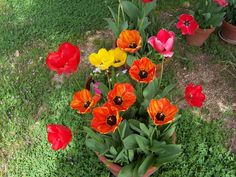 2009 flower pics :: 015.jpg picture by pdrclramirez1 - Photobucket