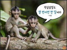 원숭이해_현실적인명언10가지04
