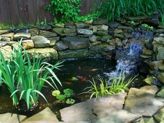 Goldfish Ponds | Koi Pond or Goldfish Pond... I want to make one for the back yard!