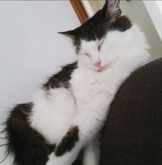 Maggie Cat | Pawshake