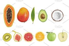2996378 watercolor papaya fruit color illustration hand background water drawn white vector isolated nature food art fresh paint freshness diet vegetarian tropical logo set symbol leaf painting juicy fruits exotic healthy mango orange raw variety grapes green view organic closeup top ripe dragon vegetables strawberry apple delicious colorful kiwi lemon peach autumn collection design dragon fruit drawing harvest health ingredient melon natural nutrition passionfruit red seed sketch slice…
