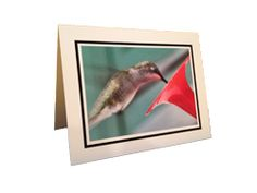 "Discover ""Denise's Critters and Crafts""    You can enjoy 6 sets (blank card & envelope) of this beautiful hummingbird scene.  A picture perfect nature moment can be enjoyed and collected by all."