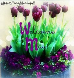 Welcome May via Living Life at www.Facebook.com/LivingLife2theFull