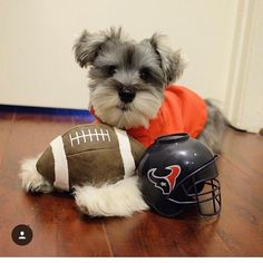 See this Instagram photo by @schnauzer_lovers • 4,138 likes