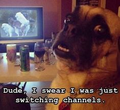 And over this embarrassing moment. | 21 Memes You'd Send To Your Dog If They Had A Computer