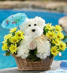 Doggie Paddle™  Surf's up for smiles when you send this sunny surprise -- our signature a-DOG-able® arrangement of white carnations and yellow poms. Hand-designed by our expert florists, it comes complete with a festive seashell and paper umbrella. Pet lovers, beachcombers, and birthday stars will almost be able to feel the sand between their paws. $49.95 www.1800flowers4giftseattle.com