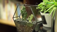 geometric  terrariums Terrarium Containers, Terrariums, Floating Frame, Plant Holders, Air Plants, Container Gardening, Flower Pots, House Warming, Cactus