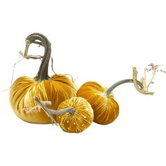 Butterfly Table, Orange Butterfly, Pumpkin Stem, White Table Settings, Gold Candles, Velvet Pumpkins, Thanksgiving Centerpieces, Girls Accessories, Fall Table