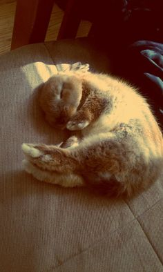 Bunny sure knows how to curl up and relax