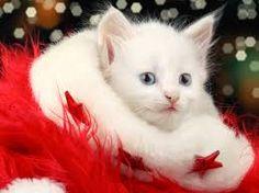 Výsledek obrázku pro wallpapers windows christmas cat