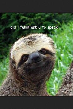 Creepy sloth whisper - photo#51