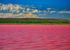 color rosa - Cerca amb Google