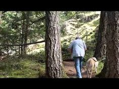 """Nanaimo Travel Blog. Episode 4 - Morrell Nature Sanctuary. In this episode, Jim takes us to a gorgeous place to hike in the wood, minutes from downtown Nanaimo. Vancouver Island. www.jimballardhomes.ca """"social"""""""