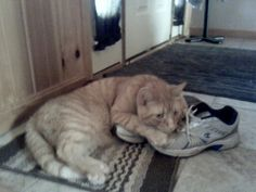 Kitty, shoes