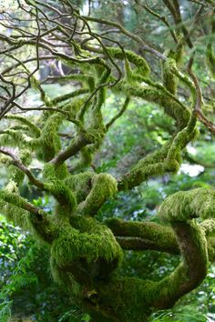 Trees in a Japanese garden. Mother Earth, Mother Nature, Moss Garden, Unique Trees, Nature Tree, Tree Forest, Belle Photo, Nature Photos, Trees To Plant