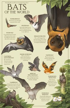 All of these bats are real bat species and absolutely none of these facts are exaggerated in any way. The flying fox's size isn't, though. Animal Facts, Animal Memes, Baby Animals, Cute Animals, Bat Species, Posca Art, Baby Bats, Fruit Bat, Cute Bat