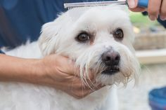 The real truth about getting rid of pet tear stains!