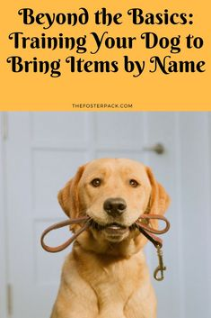 Beyond the Basics: Training Your Dog to Bring Items by Name http://thefosterpack.com/training-your-dog-to-bring-items-by-name/?utm_campaign=crowdfire&utm_content=crowdfire&utm_medium=social&utm_source=pinterest