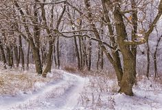 Winter road to the wood by Natalia Flora on 500px