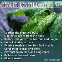 ❥ health benefits of mint