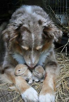 Moms have love for everyone (looks like Snip)
