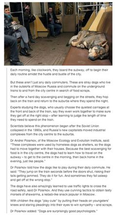 "No clue about the validity of this article, but it is still cute to think about. ""Some Seriously Smart Stray Dogs in Russia. I Love Dogs, Puppy Love, Funny Animals, Cute Animals, Smart Animals, Funny Pets, Faith In Humanity, Dogs And Puppies, Doggies"
