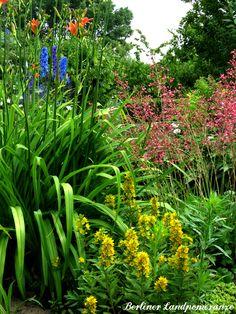 Staudenbeet  Perennial garden bed