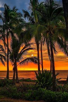 Sunset on the Beach Beautiful Landscape Photography, Beautiful Landscapes, Amazing Sunsets, Amazing Nature, Beautiful Sunrise, Beautiful Beaches, Beautiful Beach Pictures, Nature Pictures, Strand