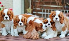 ♥ Lovely family